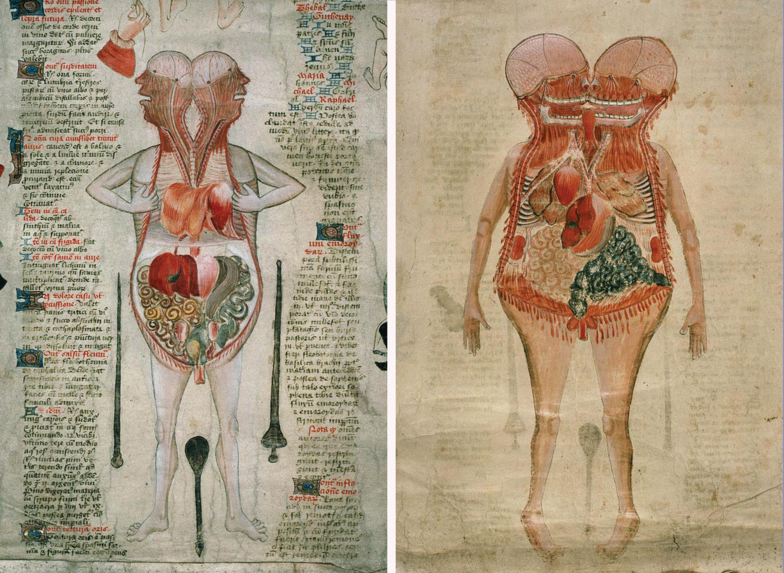 Anatomy Technology Art And Culture Toward A Realistic