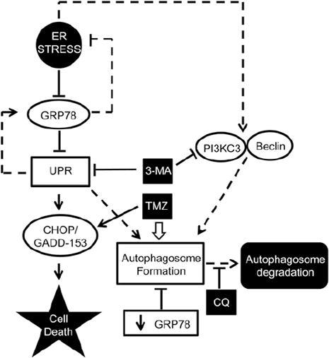 chloroquine enhances temozolomide cytotoxicity in