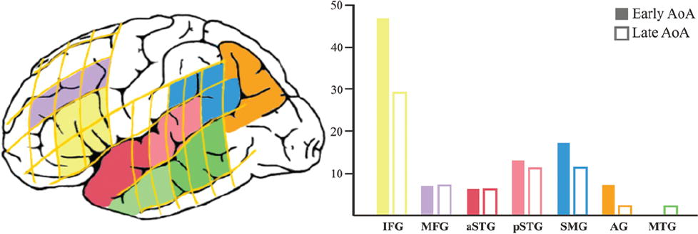 Age of language acquisition and cortical language organization in