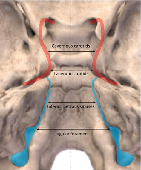 Endoscopic Endonasal Approach To The Ventral Brainstem Anatomical