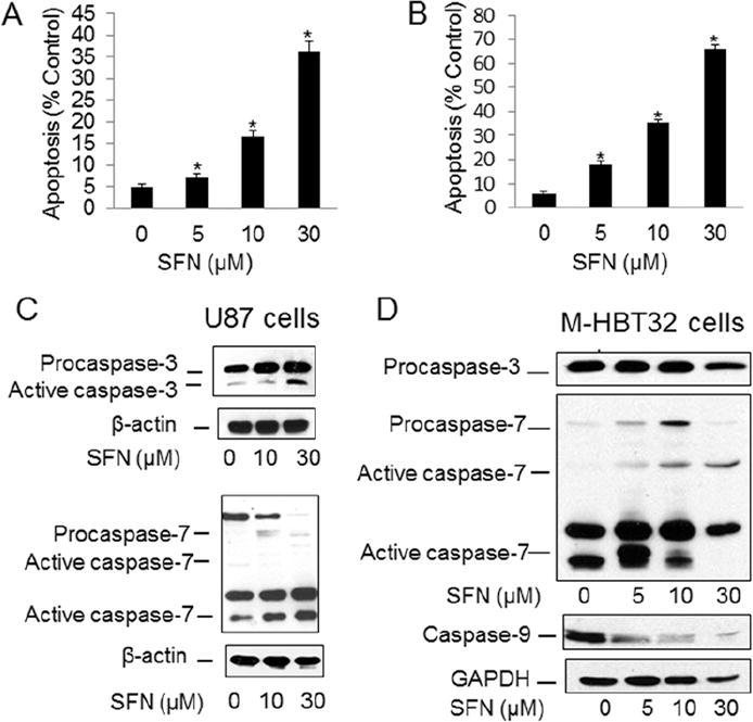 Sulforaphane suppresses the growth of glioblastoma cells