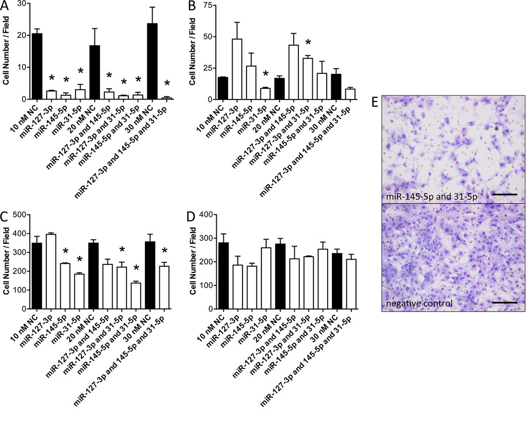 Inhibition of glioblastoma cell invasion by hsa-miR-145-5p
