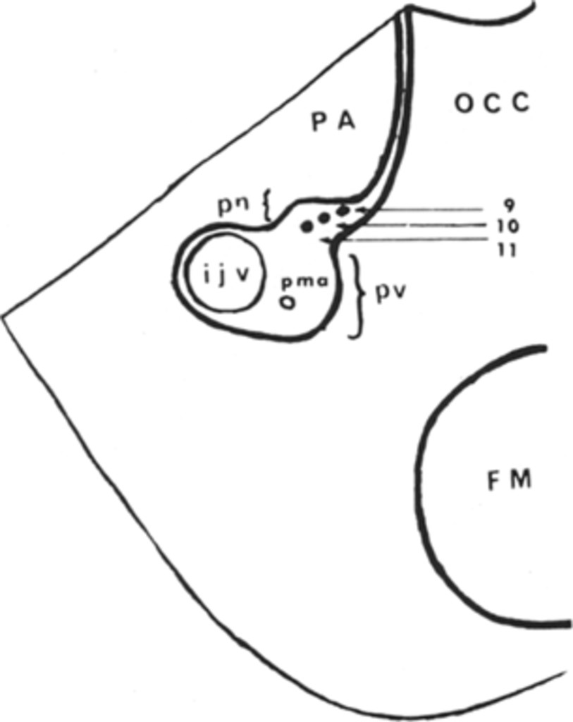 compartmentation of the jugular foramen in  journal of