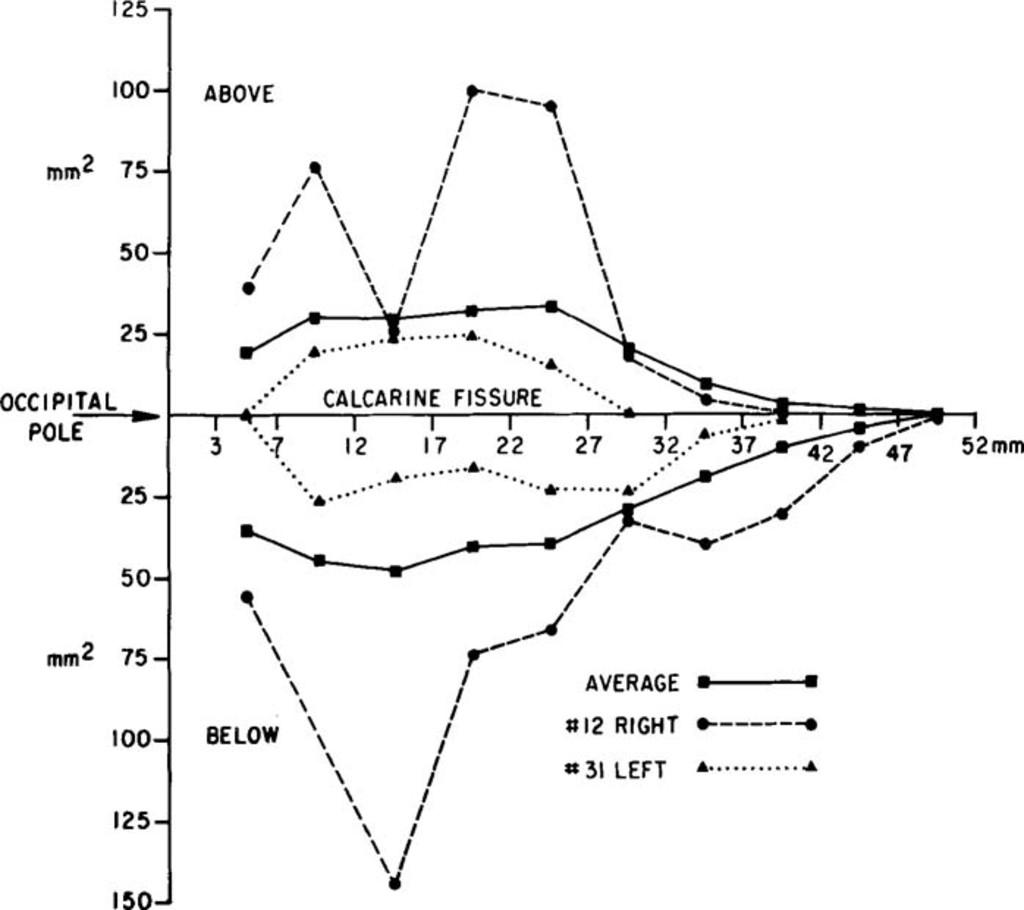 occipital bedeutung