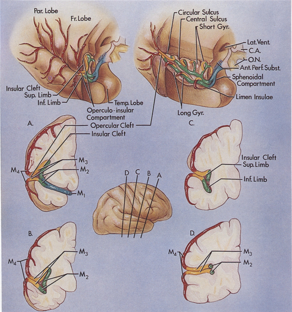 Microsurgical Anatomy Of The Middle Cerebral Artery In Journal Of