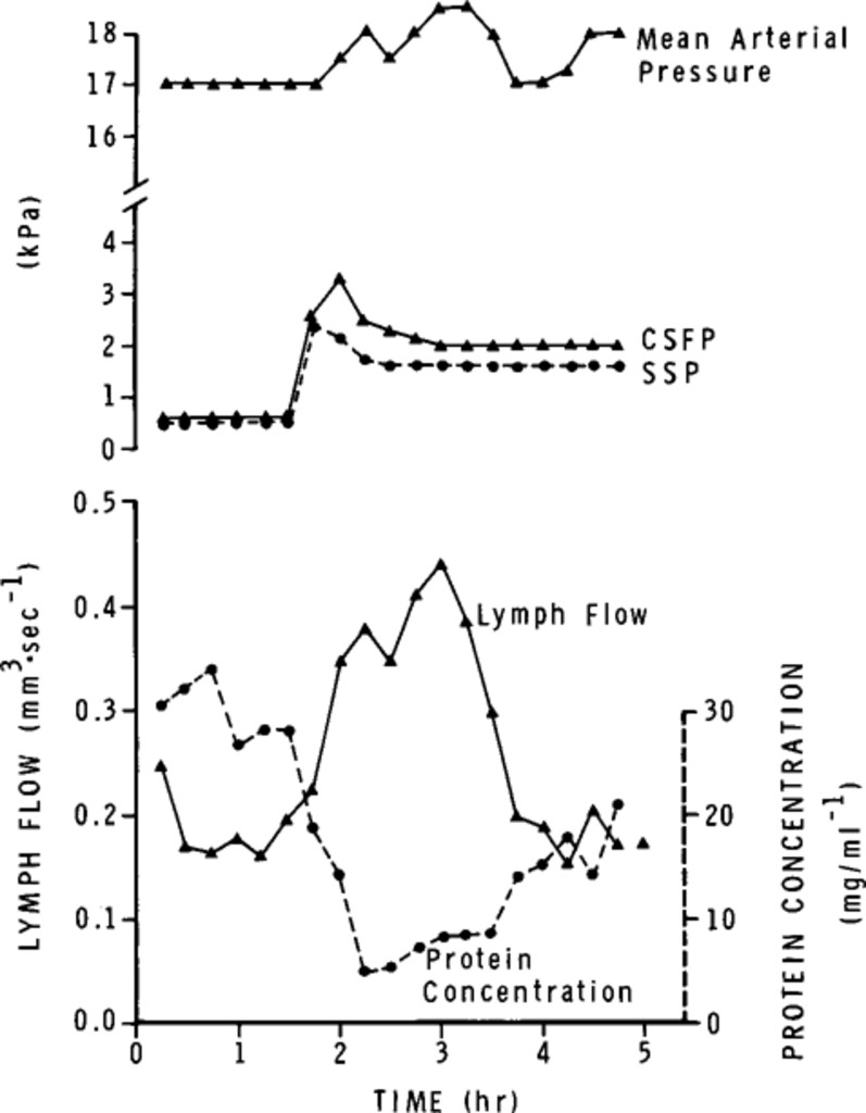 The Effects Of Raised Icp On Lymph Flow In The Cervical Lymphatic