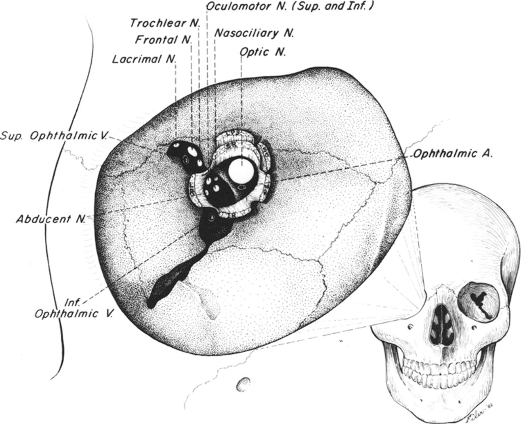 Surgical approaches to the orbit : Journal of Neurosurgery