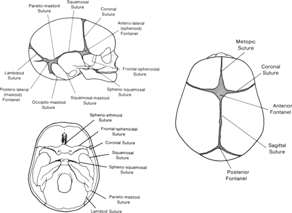 Computerized Tomography Of Cranial Sutures In Journal Of Neurosurgery Volume 61 Issue 1 1984 A synchondrosis is a joint that is connected with cartilage, like the place where the ribs meet the sternum. computerized tomography of cranial