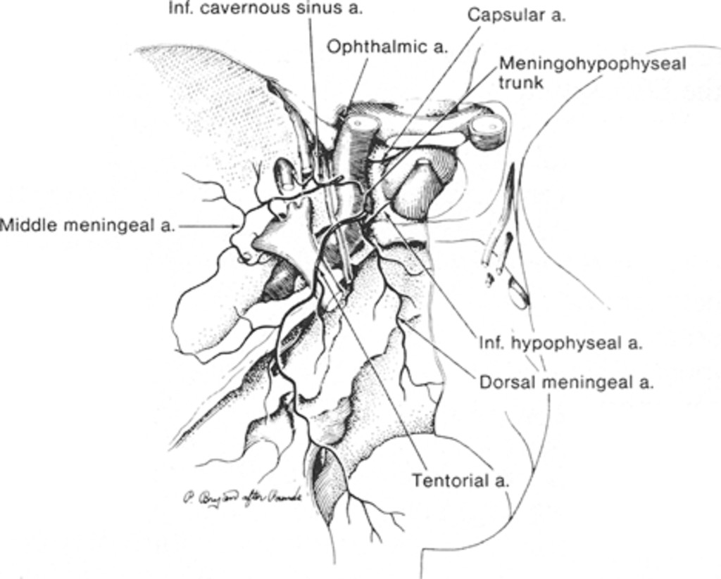 classification and treatment of spontaneous carotid cavernous sinus 22 Months Pregnant diagram showing the normal vascular anatomy as seen from above and the relationships in the region of the cavernous sinus adapted with revision from