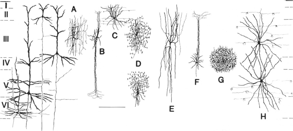 Neurotransmitters in the cerebral cortex in: Journal of