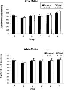 Synergistic effect of basic fibroblast growth factor and