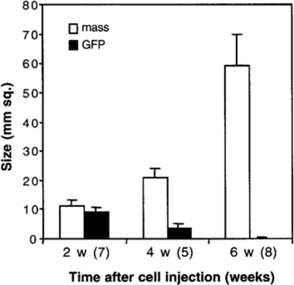 Trauma Induced Tumorigenesis Of Cells Implanted Into The Rat Spinal